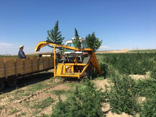 KIRPY CBD Hemp and Cananbis Harvester